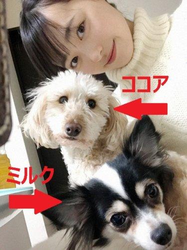 福原遥の愛犬